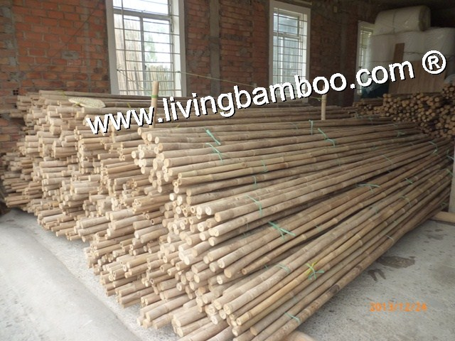 Bamboo Pole-NATURAL ROOT TAM VONG BAMBOO POLE